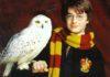 Harry Pottery la piedra filosofal: sinopsis, reparto, director, libro y más